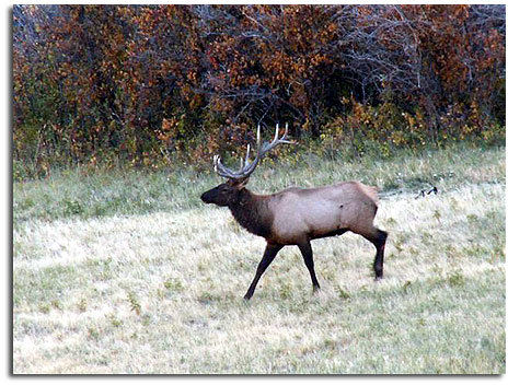 Private rifle elk hunts